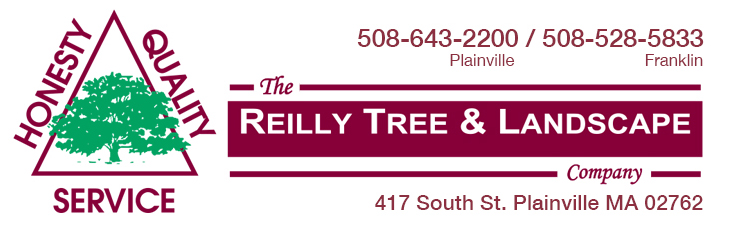 Reilly Tree and Landscape